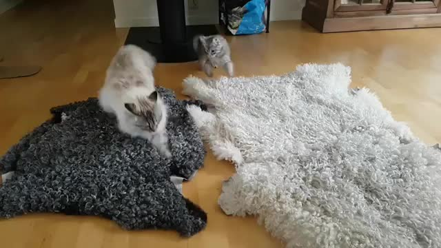 AnimalsBeingDerps, animals, cat, You Underestimate My Power GIFs