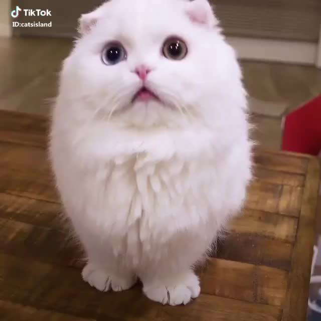 Watch and share Some Interestings GIFs by TikTok on Gfycat