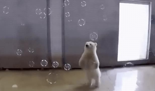 Watch and share Polar Bear GIFs by Reactions on Gfycat