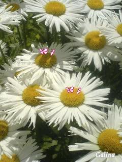 Watch and share اجمل الزهور المتحركه GIFs on Gfycat