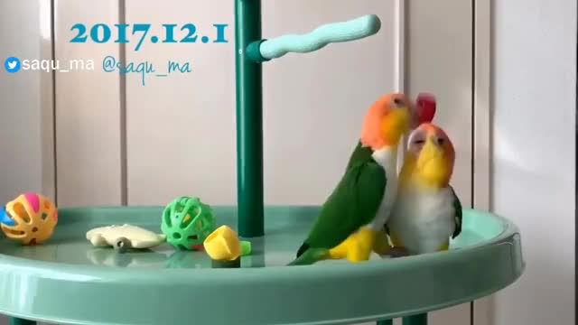 Watch and share Parrots GIFs and Parrot GIFs on Gfycat