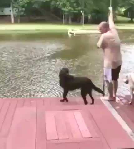What a great swimming buddy
