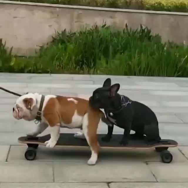Watch and share Skateboard GIFs and Fail GIFs by Boojibs on Gfycat