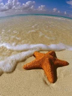 Watch and share Gifs Animados Estrellas De Mar GIFs on Gfycat
