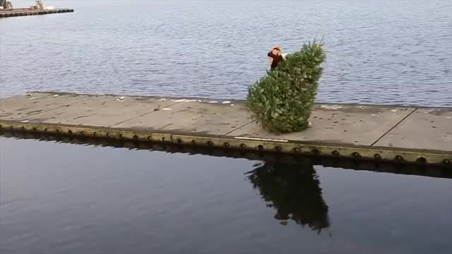 Watch and share Tossin' Trees With LKD GIFs by pemberducky on Gfycat
