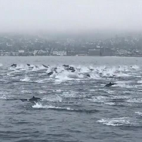 Watch this GIF by ImaAnimal (@imaanimal) on Gfycat. Discover more nature GIFs on Gfycat