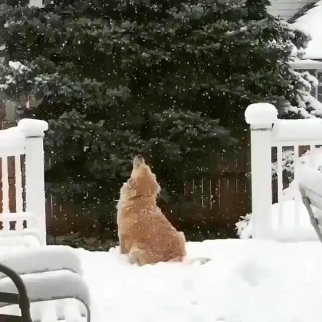 Watch and share 1st Snow GIFs by Jackson3OH3 on Gfycat