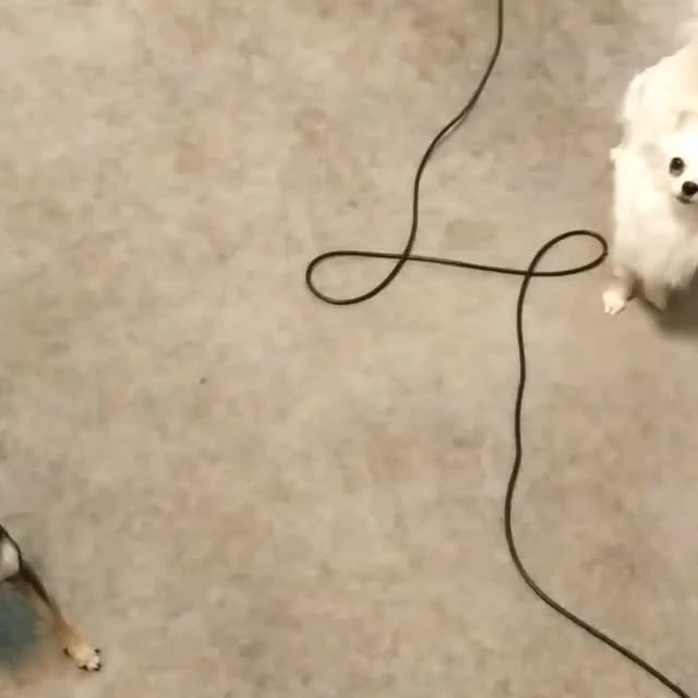 Watch and share Outside Zoomies! GIFs on Gfycat