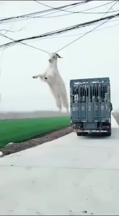 Watch Whatever floats your goat. GIF on Gfycat. Discover more Diesel_Doctor GIFs on Gfycat