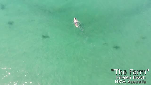 Watch The Farm GIF by @callsignapollo on Gfycat. Discover more australia, beach, drone, surfing, waves GIFs on Gfycat