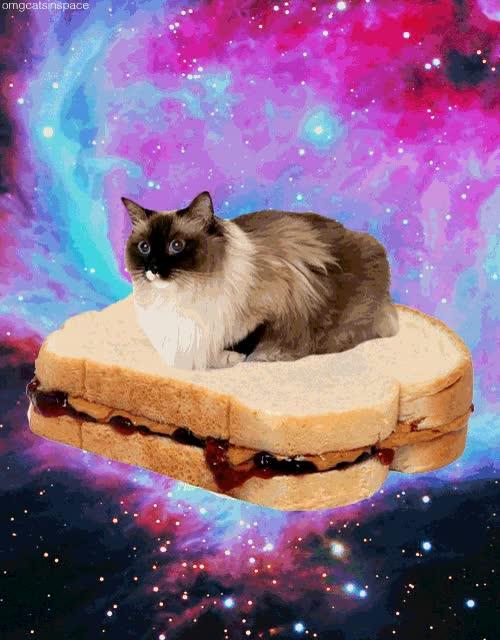 Watch and share Sandwich GIFs on Gfycat