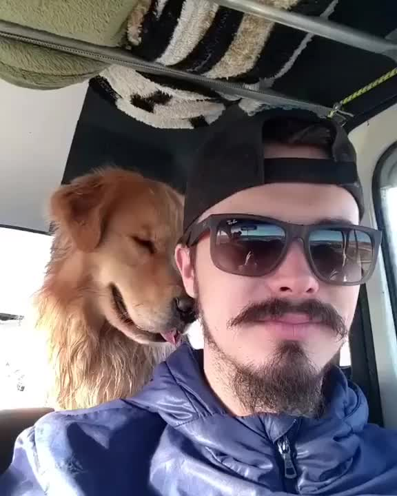 Watch Doggy see, doggy do GIF on Gfycat. Discover more mikewall GIFs on Gfycat
