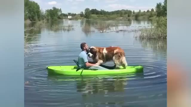 Watch and share Kayak GIFs and Dog GIFs by RespectMyAuthoriteh on Gfycat