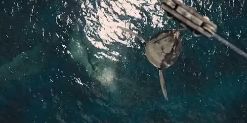Watch and share Fandom Imagines GIFs and Jurassic World GIFs on Gfycat