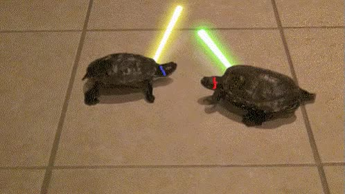 Watch and share Teenage Jedi Turtles. GIFs on Gfycat