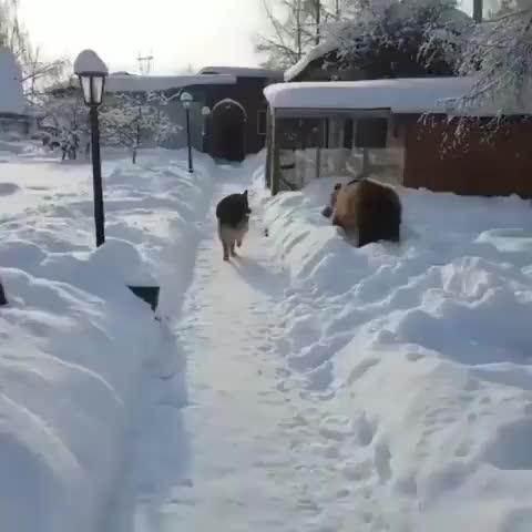 RAWR I'M A BEAR