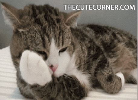 animals, cat, cat gif, cat images, cat pic, catgif, cats, cats gif, catsgif, cute cat, cute cats, cutecat, cutecats, funny animals, funny animals pic, funnyanimals, funnycat, thecutecorner, Funny cat GIFs