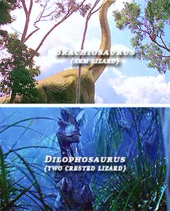 Watch Dinosaurs in the Jurassic Park films (1993-2015) GIF on Gfycat. Discover more *, *bailey, *gifs, 1k, dinosaurs, jpedit, jurassic park, jurassic park 3, jurassic world, jwedit, the lost world GIFs on Gfycat