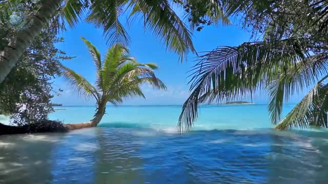 Watch and share Maldives GIFs and Ocean GIFs on Gfycat