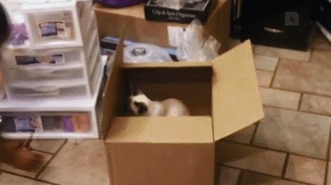 startledcats, Box scare (reddit) GIFs