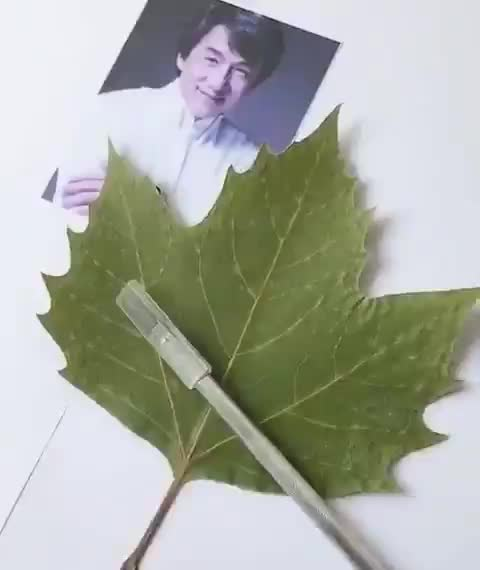 Portrait of Jackie Chan being carved into a leaf GIFs