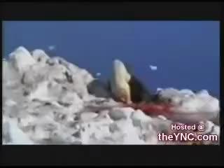 polar bear vs walrus