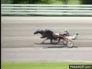 Watch Horrific Horse Racing Accident GIF on Gfycat. Discover more related GIFs on Gfycat