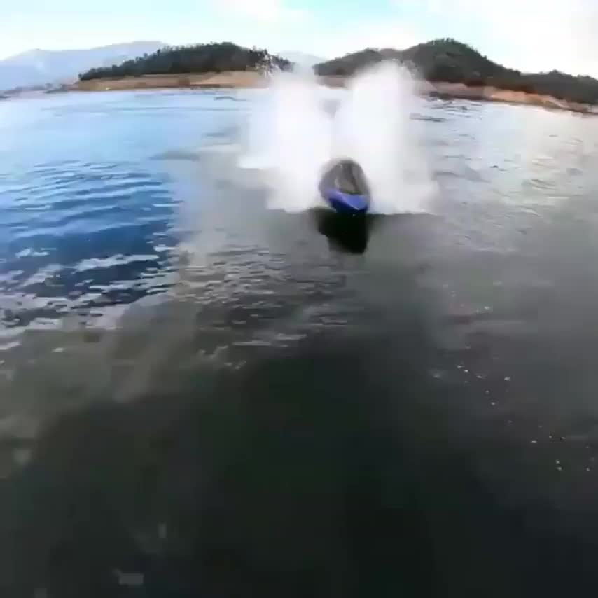 Dolphin inspired watercraft GIFs