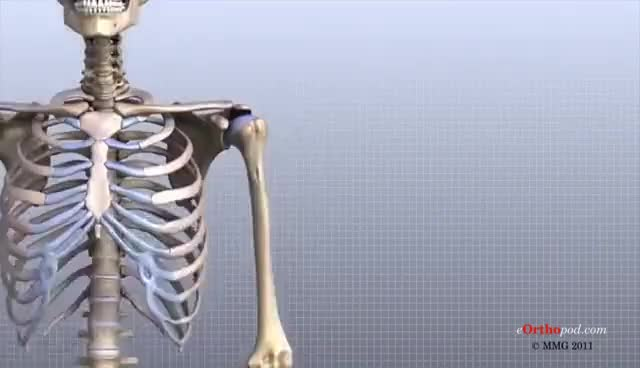 Watch and share Shoulder Joint GIFs on Gfycat