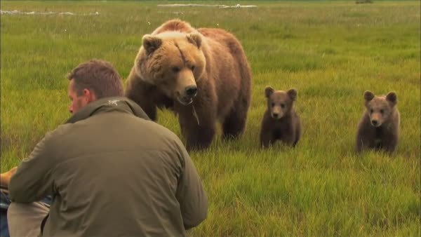 bearcubgifs, Curious cubs checking out a strange looking creature (reddit) GIFs