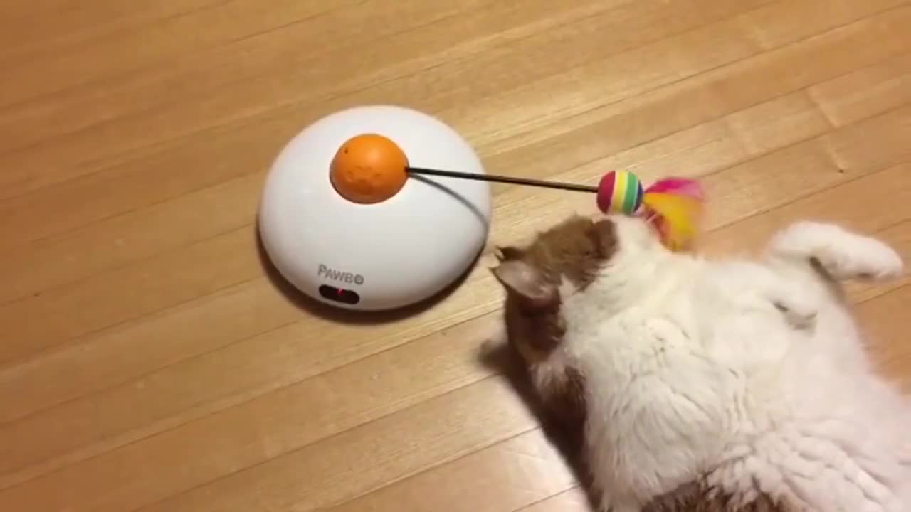 bored, cat, cute, depression, funny, helpless, lazy, lost, pet, purpose, toy, Cat loses purpose GIFs
