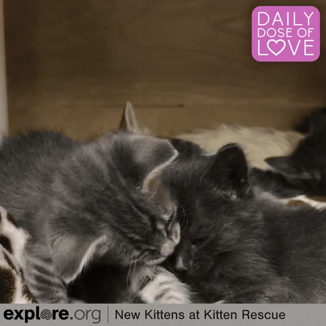 Watch and share Daily Dose Of Love GIFs and Live Nature Cam GIFs by Explore.org on Gfycat