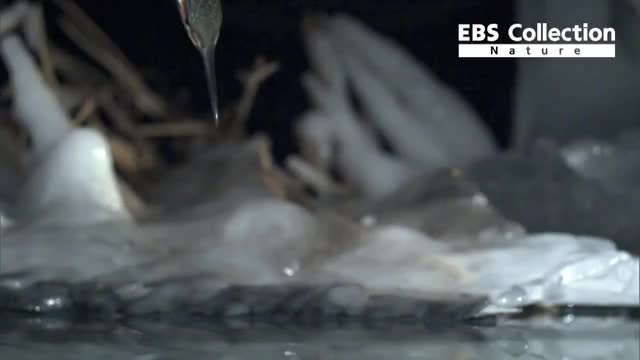Watch common kingfisher GIF by @bbbp11 on Gfycat. Discover more related GIFs on Gfycat