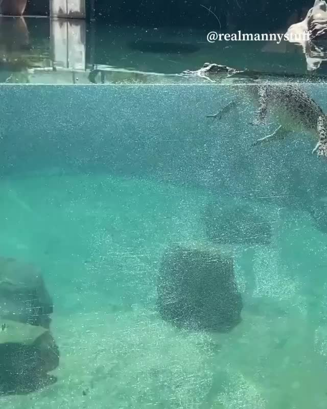 Watch and share Crocodile GIFs and Floating GIFs by PrviAxiom on Gfycat