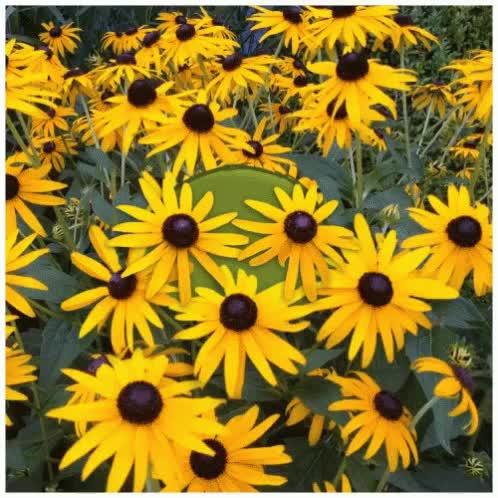 Watch and share Peekaboo Flowers GIFs on Gfycat