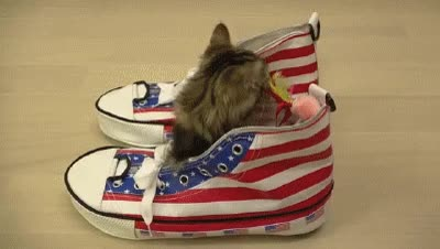 Watch and share Kitten GIFs and Shoes GIFs on Gfycat