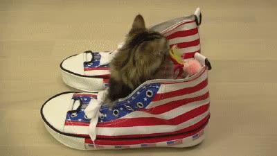 cat, kitten, shoe, shoes, Shoes GIFs