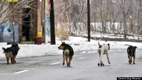 Watch and share O-DETROIT-DOG-RESCUE-570 GIFs on Gfycat