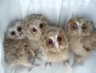 Watch and share Owls GIFs on Gfycat
