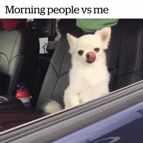 Watch this dogs GIF by Photo Mirages (@insanewayne) on Gfycat. Discover more dogs, funny, meme, morning, morning people, true GIFs on Gfycat