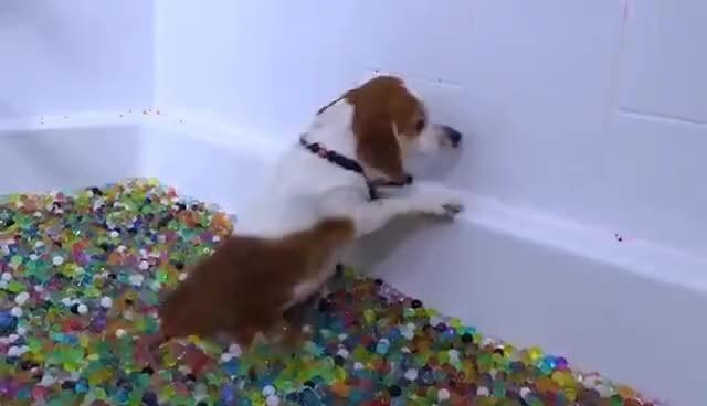 Watch and share Puppies VS Orbeez Challenge! GIFs on Gfycat