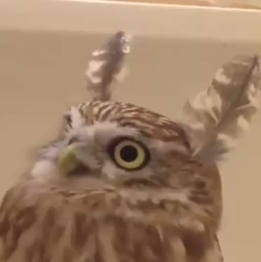 Watch this owl GIF by @stillbequiet on Gfycat. Discover more owl GIFs on Gfycat