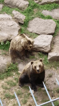 bearsdoinghumanthings, gifs, popular,  GIFs