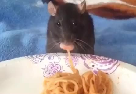 Watch this pasta GIF by GIF Queen (@ioanna) on Gfycat. Discover more cute, day, dinner, drinking, eat, eating, food, hungry, lunch, mouse, national, pasta, sweet GIFs on Gfycat