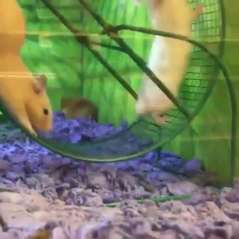 aww, hamster, funny, Thanks buddy GIFs