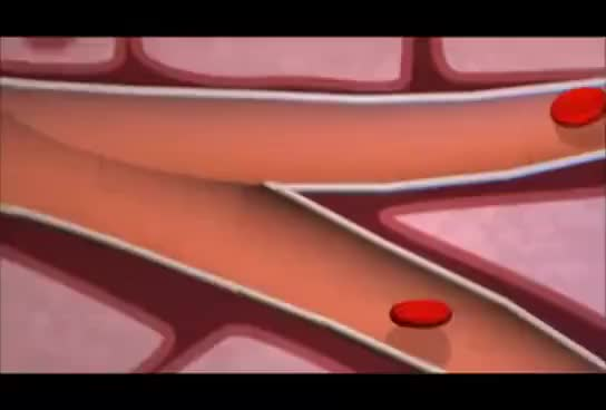 Watch insulin GIF on Gfycat. Discover more biology GIFs on Gfycat