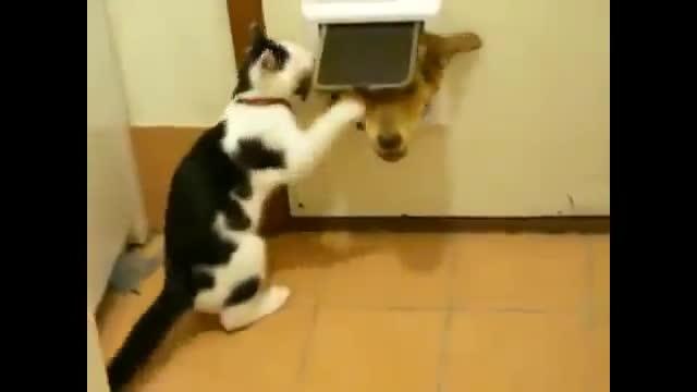 CatSlaps, animalsbeingjerks, Cat slaps GIFs