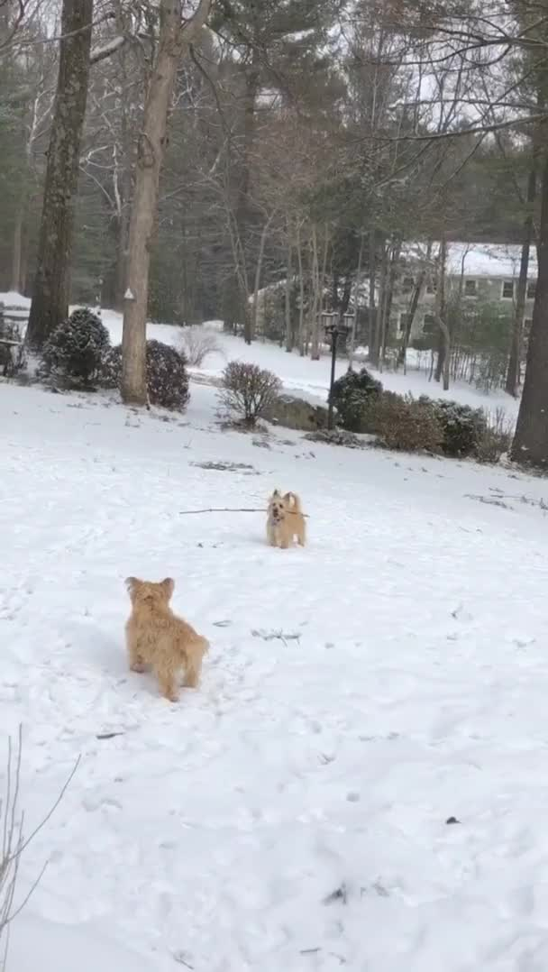 Watch and share O4pajfthztj21 GIFs by adorableicecream on Gfycat