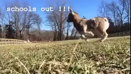 Watch and share Goats ! GIFs on Gfycat