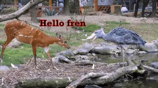 Watch and share Shoebill Stork GIFs and Deer GIFs on Gfycat